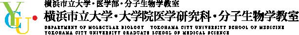 分子生物学教室|横浜市立大学・大学院医学研究科